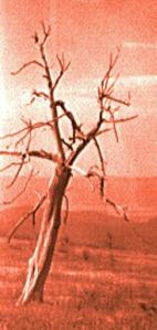 2tree